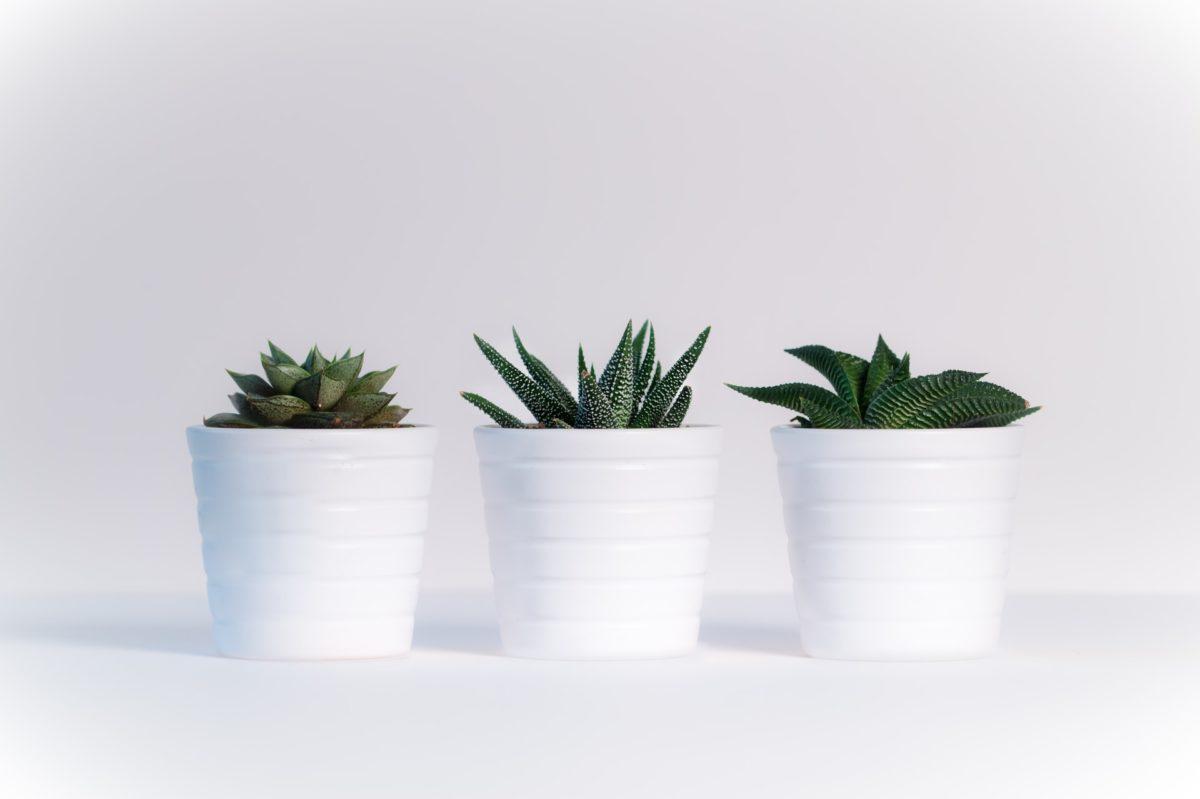 Three Pot Plants for Kitchen