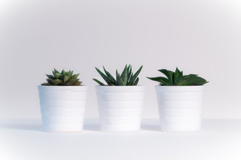 Three Pot Plants for Kitchen